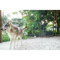 Safari Edventure - Dakota